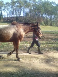 cheval-médiation
